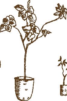 イラスト木